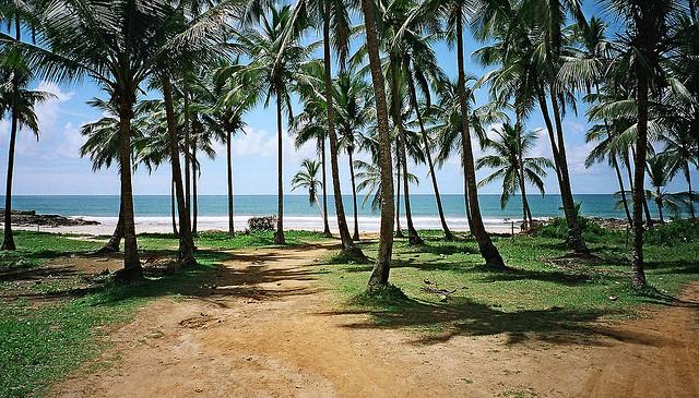 Coqueiral em Itacaré, Bahia -