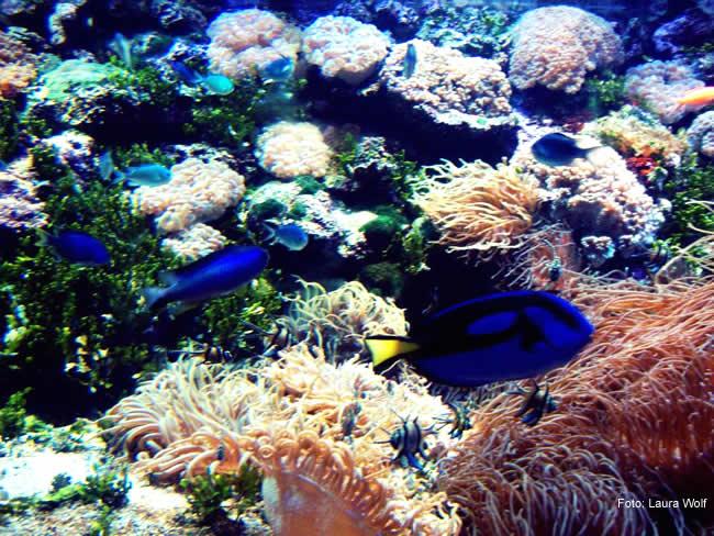 Corais no norte da Austrália, em Queensland
