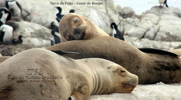 Parque Nacional da Terra do Fogo, Argentina