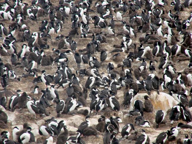 Pinguins, leões-marinhos & Cia.