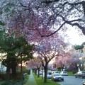 Primavera em Vancouver, Canadá