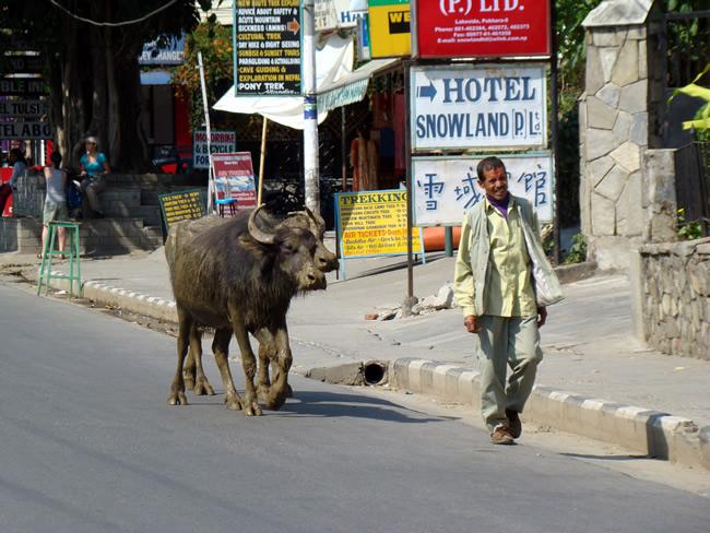 Rua de Pokhara, Nepal