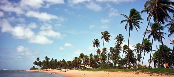 Coqueiros na Praia do Forte, na Bahia