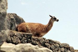 Trilha Inca, Peru