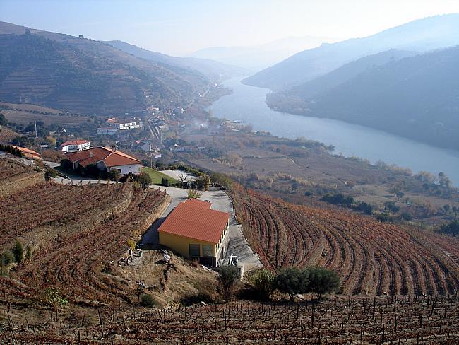 Plantações de vinhas às margens do Rio Douro, Portugal