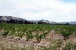 Provence, vinhedos, França