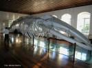 Museu da Pesca, santos