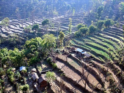 Nepal, plantações em terraço
