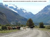 Cavalos na estrada em El Chaltén, Argentina