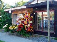 Flores de madeira, Pucón