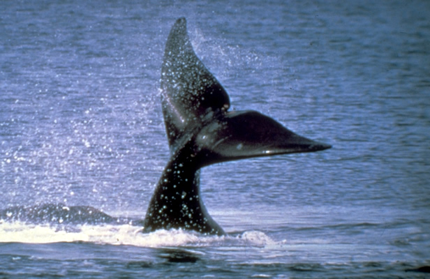 Baleia em Puerto Madryn, Argentina