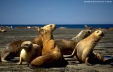 Fauna marinha na Terra do Fogo