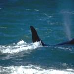 Puerto Madryn, baleias