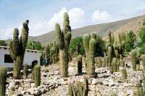 Tilcara, Quebrada de Humahuaca, Argentina - Foto: Manual do Turista