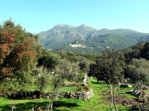 Cape Corse, plantação de oliveiras