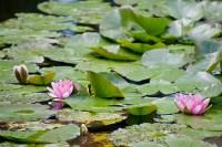 Le Jardin de Monet, Foto Mat's eye CC BY