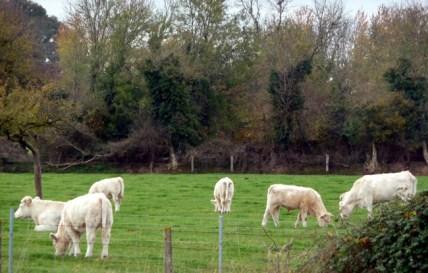 Normandia, criação de ovelhas