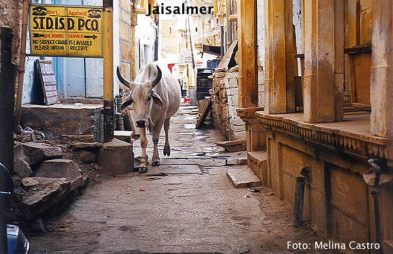 Jaisalmer, vaca