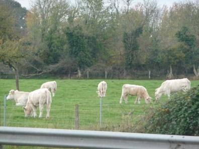 Normandia, estrada