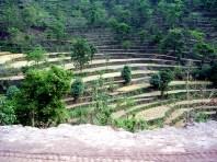 Plantaçõs em terraço, Norte da Índia