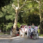 Passeios de carruagem no Central Park, Nova York