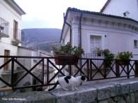 scanno-gatos-sempre-bem-cuidados