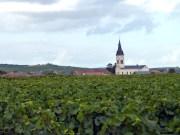 Vinhedos na Champagne, França