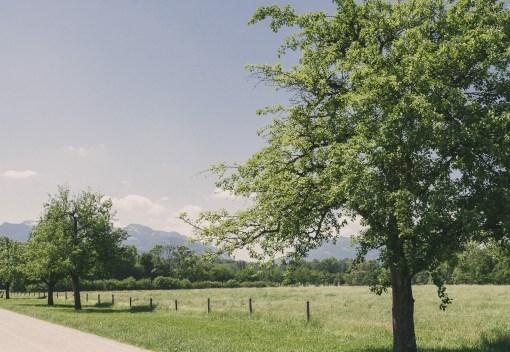 Natur am Chiemsee
