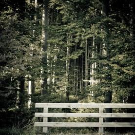Wald Tutzing