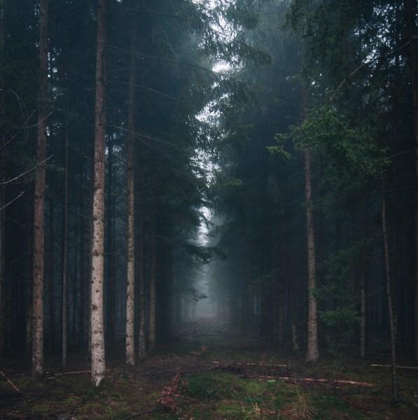 Gautinger Wald im Nebel