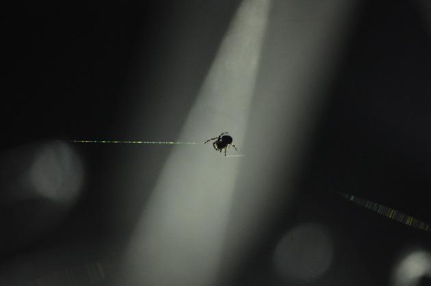 Die Spinne Hugo im Netz