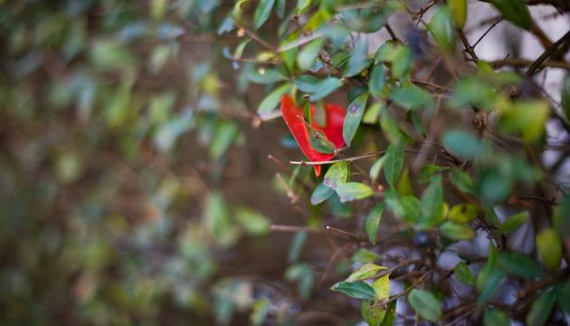 Landschaftsfotografie – rotes Blatt in einem Busch