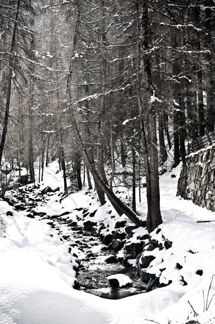 Bach im Winterwald