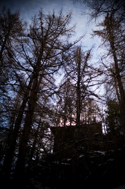 Haus und Wald im Gegenlicht in Zermatt
