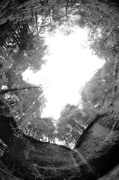 Waldlichtung in extremer Perspektive, aufgenommen mit einem Fischauge-Objetiv
