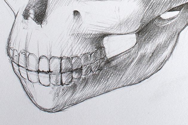 20160222_schaedel-illu-detail-kiefer