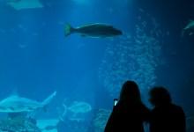Oceanário de Lisboa – Beitragsbild mit Besuchern vor dem Hauptaquarium