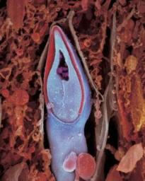 Esperma dentro del óvulo.