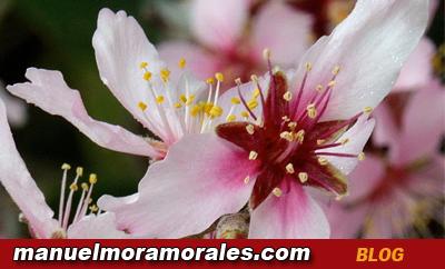 Foto de Manuel Mora Morales