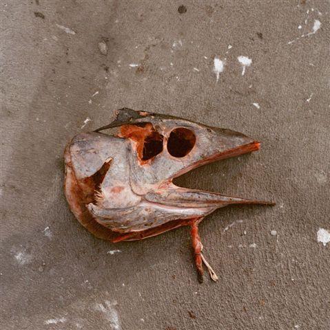 peixe espada.jpg