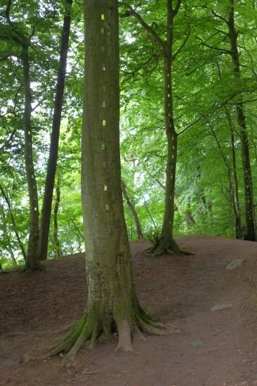 Femke Van Dam: Looking to a Secret World