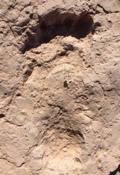 Tucson-footprint-small