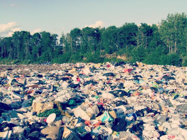 Landfill Fungus Plastics
