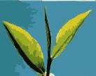 leaves-29081_1280_leaf