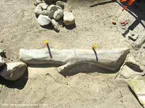 "Kado's faux wood cement ""log"" around the Block 17 garden pond. Photo by Jeff Burton, courtesy of NPS."