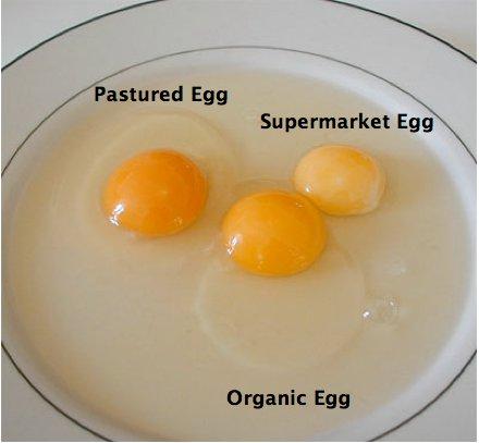 EggsComparision
