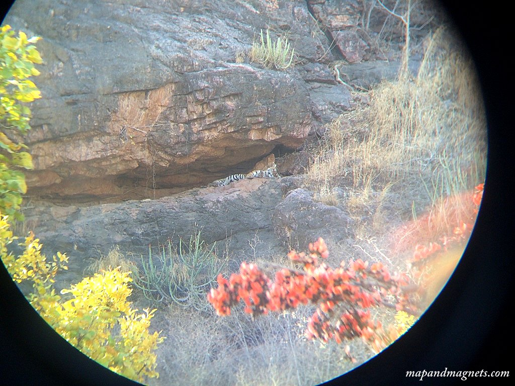 Unfortunately, I didn't have a great zoom lens so had to photograph this tiger sleeping high up in a cave through binoculars!