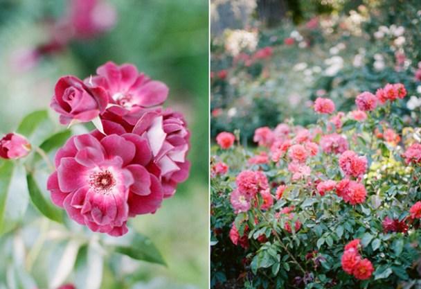 Rose Garden Portland OR