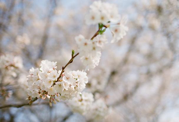 Spring at Fearrington