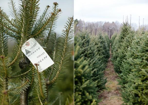 Christmas Tree Farm Cape Elizabeth